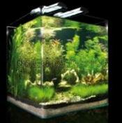 aquarium komplettset 35 bis 100l g nstig kaufen. Black Bedroom Furniture Sets. Home Design Ideas
